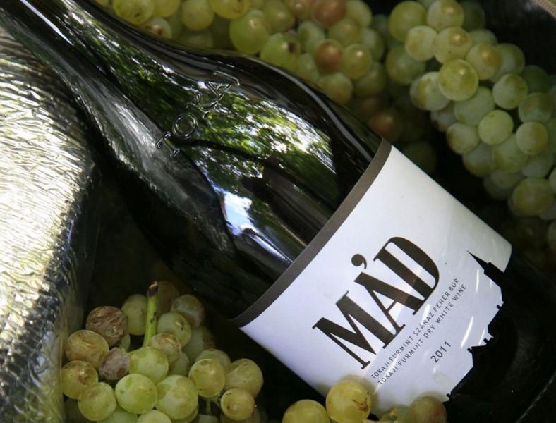 Wine tourism – Mád and its neighborhood