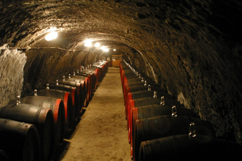 The Tokaj Museum Wine Collection